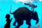 KHAO KHEOW OPEN ZOO (สวนสัตว์เปิดเขาเขียว), Chonburi