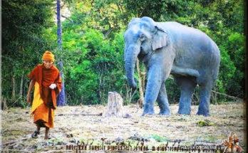 LUANG PU SUPHIT KANTAJARO (หลวงปู่สุพิศ กันตจาโร), Bueng Kan