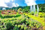 QUEEN SIRIKIT BOTANIC GARDEN (สวนพฤกษศาสตร์สมเด็จพระนางเจ้าสิริกิติ์), Chiang Mai