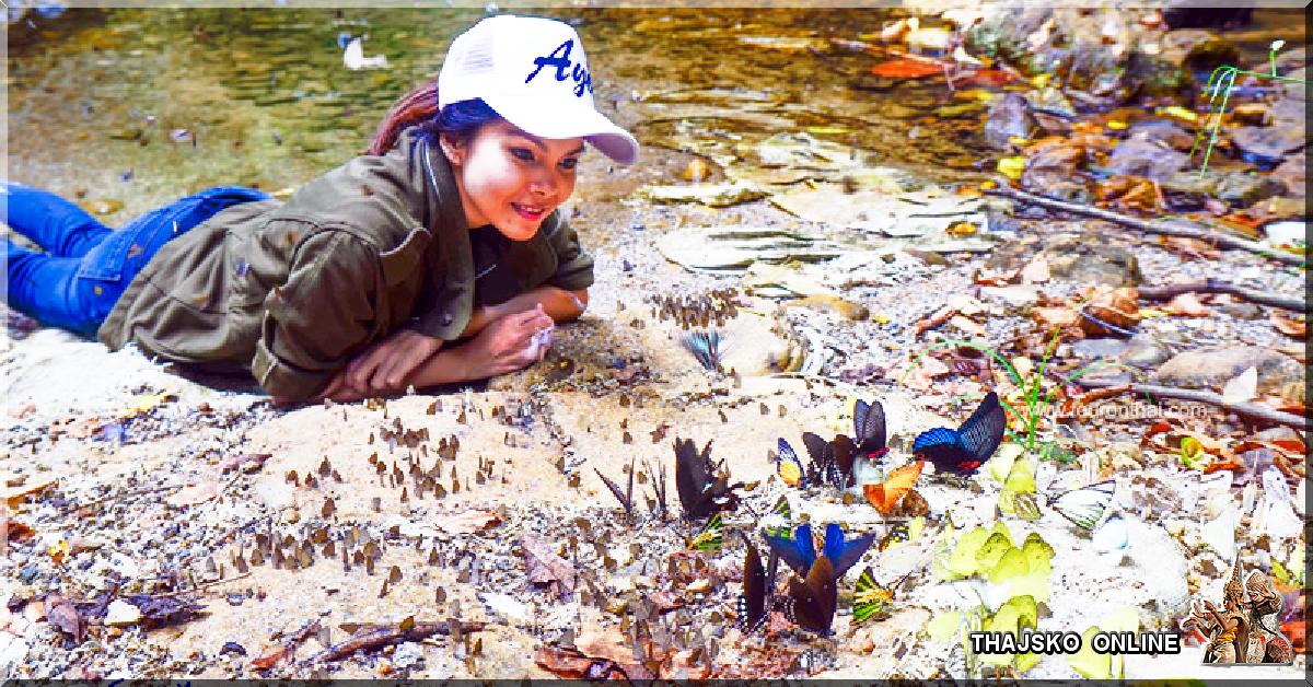 MOTÝLI V KAENG KRACHAN (อุทยานแห่งชาติแก่งกระจาน), Phetchaburi