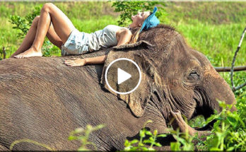 SAIYOK ELEPHANT CAMP (ปางช้างไทรโยค), Kanchanaburi